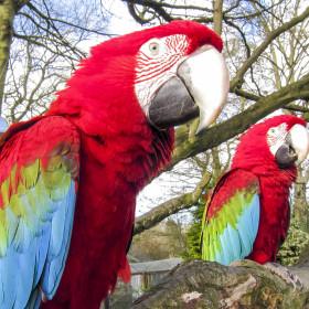 Woodland, wetlands, parrots and pelicans